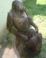 kan dyr være homoseksuelle